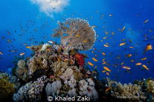 Coral Reef Shark Bay taken by Canon 5D mk3 8-15 fish eye ... by Khaled Zaki