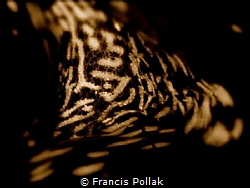 A close-up turned into Blach & White by Francis Pollak