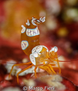 Defensive Squat Shrimp