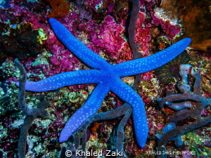 Sea Star -Philippines by Khaled Zaki