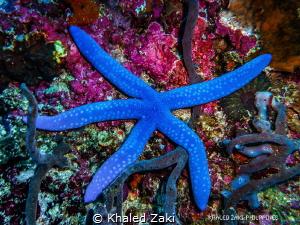 Sea Star -Philippines by Khaled Zaki
