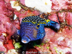 Colorful. by Stephan Gosselin