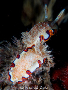 2 is a company Nudibranch-Qatar by Khaled Zaki