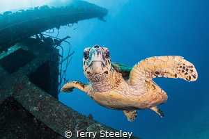 The guardian of the wreck — Subal underwater housing, Ca... by Terry Steeley