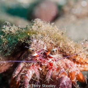 'Moving home.' — Subal underwater housing, Canon 5D mk2,... by Terry Steeley