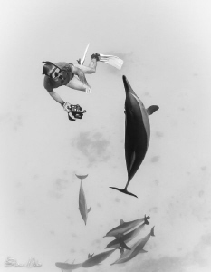 Martin free diving with Spinner Dolphin by Steven Miller