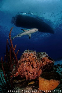 Clear water and healthy reefs enhance the presence of sha... by Steven Anderson