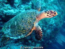 Taken off Medjumbe island, in the quirimbas archipelago. by Jamie Lonsdale