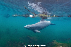 An Unexpected Encounter While I was looking for manatees... by Tanya Houppermans