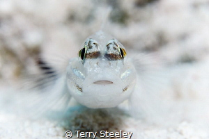 'Your eyes dazzle me'