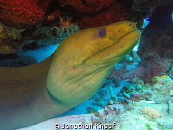 Green Moray by Jonathan Knauf