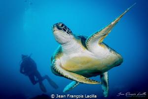 Turtle in Bonaire by Jean François Lacilla