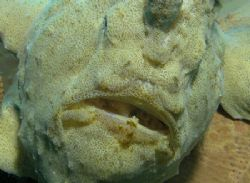 Anglerfish by Brocken Rudi