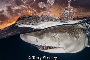 Few encounters are more rewarding than shooting sunset sp... by Terry Steeley