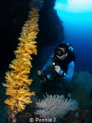 Diver and rope of soft corals by Ponnie J