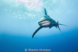 Oceanic Whitetips approaching by Martin Hristov
