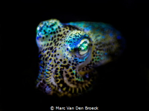 """cuttle""fish by Marc Van Den Broeck"