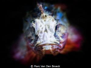 evil Scorpio fish by Marc Van Den Broeck