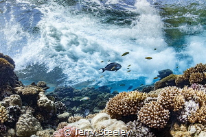 The motion of the ocean. Patiently, I counted waves. Wait... by Terry Steeley