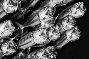 'Sing for your supper' — Subal underwater housing, Canon... by Terry Steeley