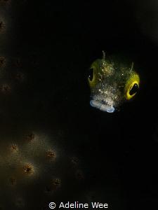 "An ""alien"" underwater by Adeline Wee"