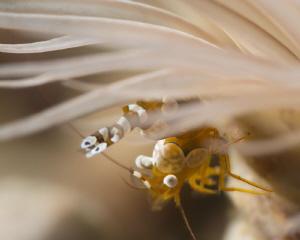 Squat shrimp by James Deverich