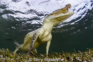 Jurassic crocs — Subal underwater housing, Zen DP230, Ca... by Terry Steeley