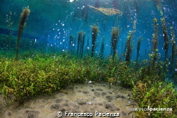 Magic underwater paradise. by Francesco Pacienza