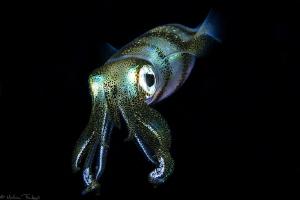 filipino squid #4 by Mathieu Foulquié