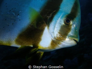 Up close and personal! by Stephan Gosselin