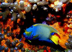 """""""The Queen of the Reef"""" This photo was taken in Cozumel i... by Steven Anderson"""
