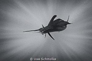 Dart by Uwe Schmolke