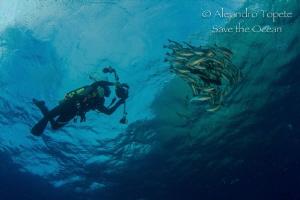 Poncho shoting,Isla Wolf Galápagos by Alejandro Topete
