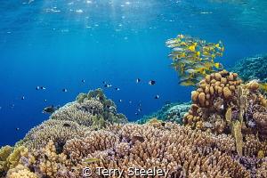 Light beams on Elphinstone reef by Terry Steeley