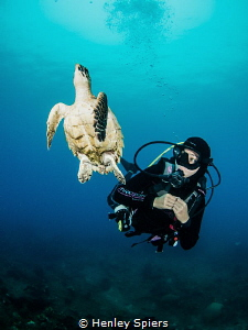 Diver and a Friendly Hawksbill Turtle by Henley Spiers
