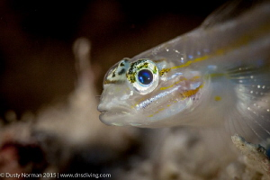 """Blue Eyes""