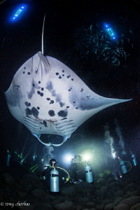 Manta Disco by Tony Cherbas