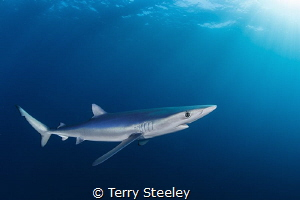Blue on blue. Sharing time in the ocean with these large ... by Terry Steeley
