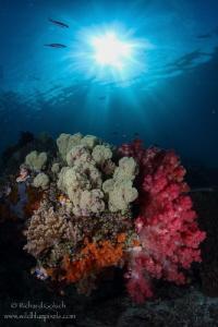 Coral Garden-Raja Ampat by Richard Goluch