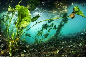 underwater forest (Lez river, France) by Mathieu Foulquié