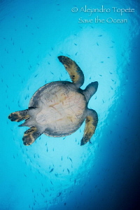 Turtle in the Sky, Isla Wolf Galápagos by Alejandro Topete