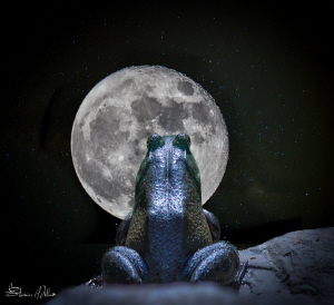 Happy Thanksgiving! -almost a full moon tonight by Steven Miller
