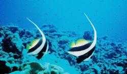 Shark Reef Twins by Morgan Ashton