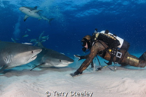 'Down Boy'. Rowdy tiger sharks occasionally require a cal... by Terry Steeley