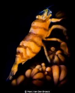bugs by Marc Van Den Broeck