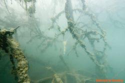 "Poland, small lake in Opole SILESIA ""Pendulum"" by Olgierd Graca"