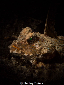 Fingered Dragonet by Henley Spiers