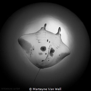 Manta Ray named 'Blue Star' as seen through a fisheye lens by Marteyne Van Well