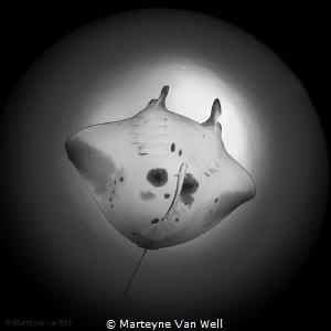 Manta Ray named 'Blue Star' as seen through a fisheye lens by Marteyne Van Well