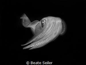 Friendly squid by Beate Seiler